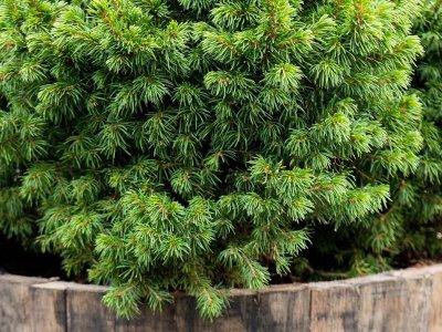 Vinterkrukkeplanter