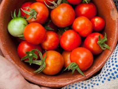 Tomater er en tillidssag