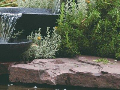 Anvend regnvandet og få en frodig have