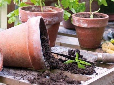 Oversigt over drivhus-specialiteter