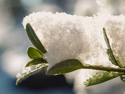 Vinterbeskyttelse af havens planter